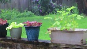 Plantas en conserva hacia fuera en la lluvia