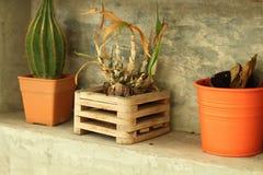 Plantas en conserva para el estilo moderno de la decoración casera Fotos de archivo libres de regalías