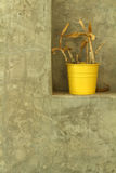 Plantas en conserva para el estilo moderno de la decoración casera Imagen de archivo libre de regalías