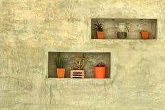 Plantas en conserva para el estilo moderno de la decoración casera Imagenes de archivo