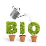 Plantas en conserva que forman la palabra bio Imagen de archivo libre de regalías