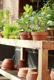 Plantas en conserva que se sientan en el carro de madera en invernadero foto de archivo libre de regalías