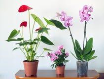 Plantas en conserva vivas en potes en el interior fotos de archivo libres de regalías