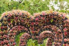 Plantas en corazón formado potes en jardín Imagenes de archivo