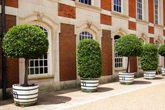Plantas en crisoles Foto de archivo libre de regalías