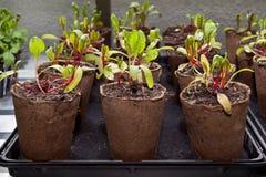 Plantas en crisoles Fotografía de archivo