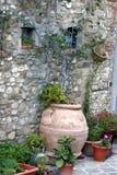 Plantas en crisoles decorativos Fotos de archivo libres de regalías