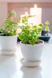 Plantas en crisoles y velas Imagenes de archivo