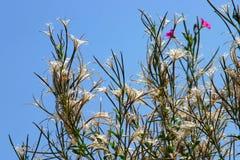 Plantas en el cielo azul Foto de archivo