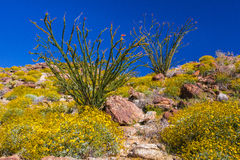 Plantas en el desierto Foto de archivo