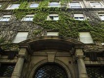 Plantas en el edificio histórico Imagen de archivo