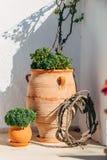 Plantas en el florero Santorini Fotografía de archivo