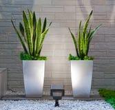 Plantas en el interior Imagen de archivo libre de regalías