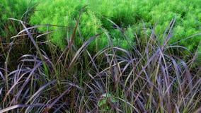 Plantas en el jardín Fotografía de archivo