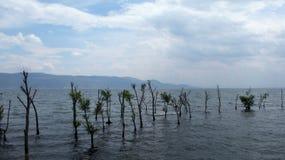 Plantas en el medio de ErHai Imagen de archivo libre de regalías