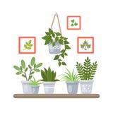 Plantas en estante stock de ilustración