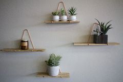 Plantas en estantes de madera en una pared blanca Fotografía de archivo