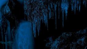 Plantas en helado encima después de una noche de la congelación fotografía de archivo