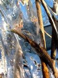 Plantas en hielo Imagen de archivo libre de regalías