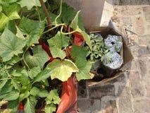 Plantas en huerto Fotos de archivo