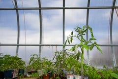 Plantas en invernáculo Foto de archivo libre de regalías