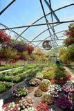 Plantas en invernadero Fotografía de archivo