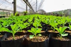Plantas en invernadero Fotos de archivo libres de regalías