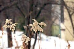 Plantas en invierno Foto de archivo libre de regalías