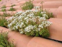 Plantas en la azotea de azulejo Imagenes de archivo