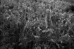 Plantas en la estación del invierno Foto de archivo libre de regalías