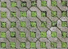 Plantas en la pared Foto de archivo