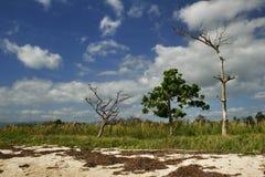 Plantas en la playa Imagen de archivo libre de regalías