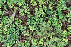 Plantas en la tierra imagen de archivo