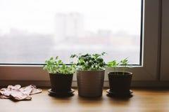 Plantas en la ventana, opinión de la ciudad Foto de archivo