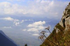 Plantas en las montañas y las nubes Foto de archivo libre de regalías