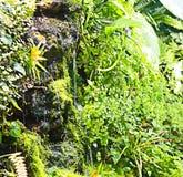 Plantas en las regiones subtropicales en el agua Fotos de archivo