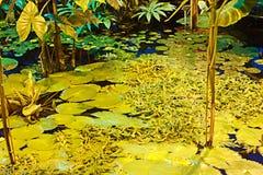 Plantas en las regiones subtropicales en el agua Imagen de archivo
