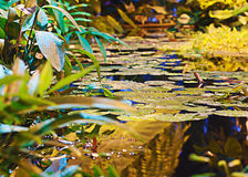 Plantas en las regiones subtropicales en el agua Imagen de archivo libre de regalías