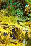 Plantas en las regiones subtropicales en el agua Fotografía de archivo libre de regalías