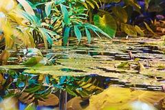 Plantas en las regiones subtropicales en el agua Fotos de archivo libres de regalías