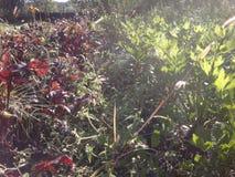 Plantas en luz del sol imagen de archivo