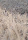 Plantas en luz del sol de la helada. fotografía de archivo