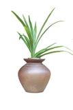 Plantas en potes Imagen de archivo