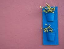 Plantas en potes azules en una pared magenta Fotografía de archivo libre de regalías