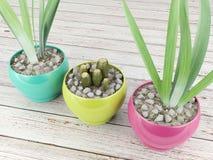 Plantas en potes de cerámica Foto de archivo libre de regalías