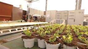 Plantas en potes en el transportador, plantas m?viles en potes en el pavimento Plantas crecientes de la instalaci?n moderna, inve almacen de video