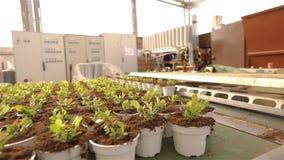 Plantas en potes en el transportador, plantas m?viles en potes en el pavimento Plantas crecientes de la instalaci?n moderna, inve metrajes