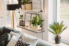 Plantas en sala de estar acogedora imágenes de archivo libres de regalías