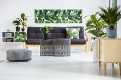 Plantas en sala de estar verde imagenes de archivo