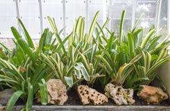 Plantas en un invernadero de un jardín botánico en la ciudad de Valen Fotos de archivo libres de regalías